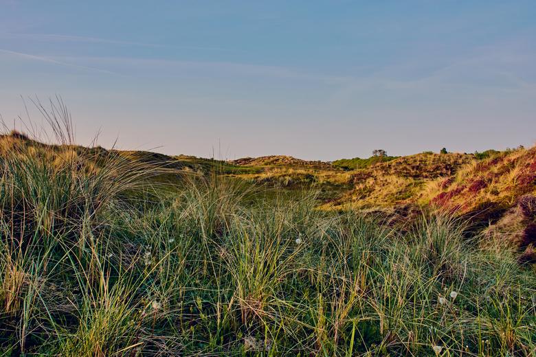 Dünen am Strand von Schoorl