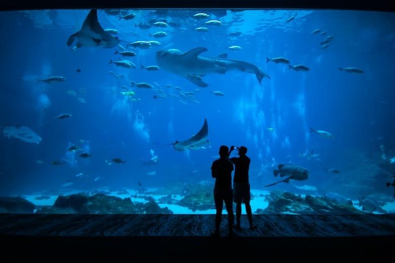 Aquarium im WILDLANDS Tierpark Emmen