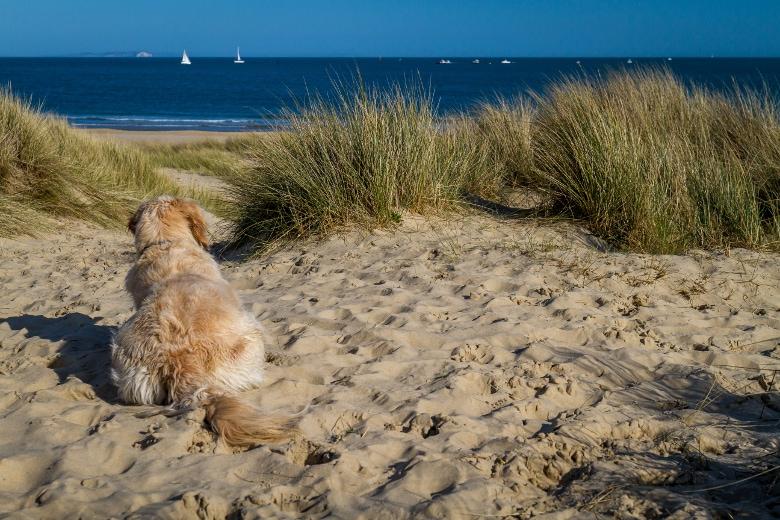 kurzurlaub mit hund nordsee