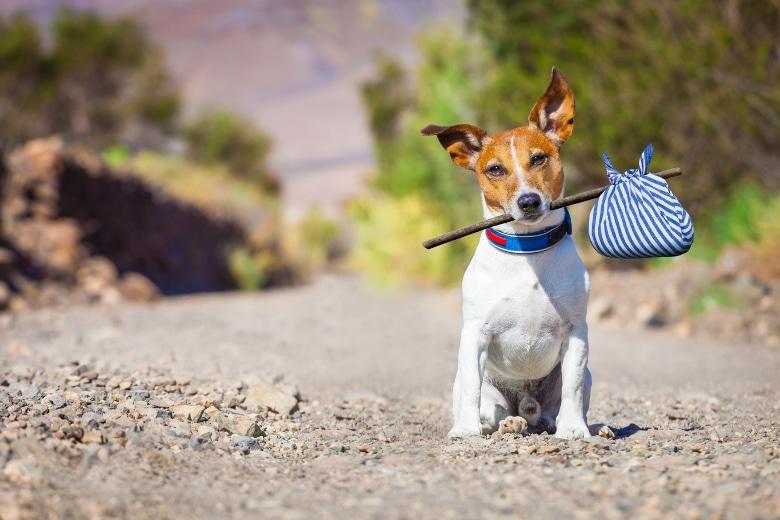 Urlaub mit hund in deutschland tipps vom spezialisten for Ferien auf juist mit hund