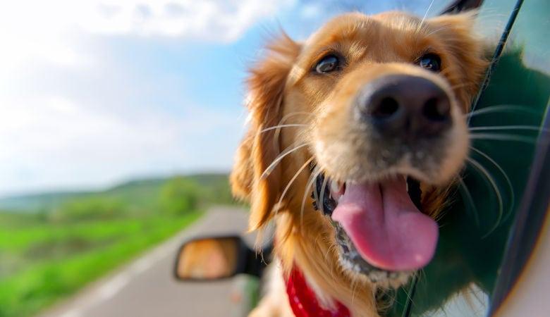 Urlaub über Ostern mit dem Hund