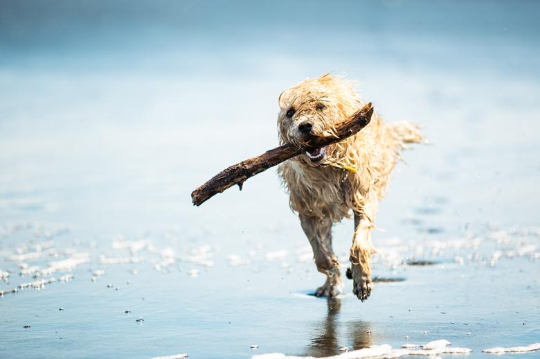 Urlaub in Holland am Meer mit Hund