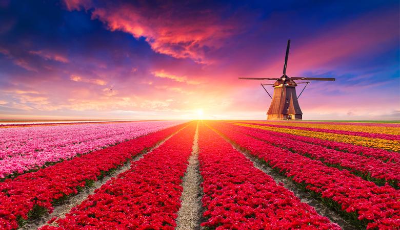 Wo ist die Tulpenblüte am schönsten?