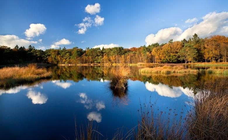 Urlaub im Wald in Holland, Drenthe