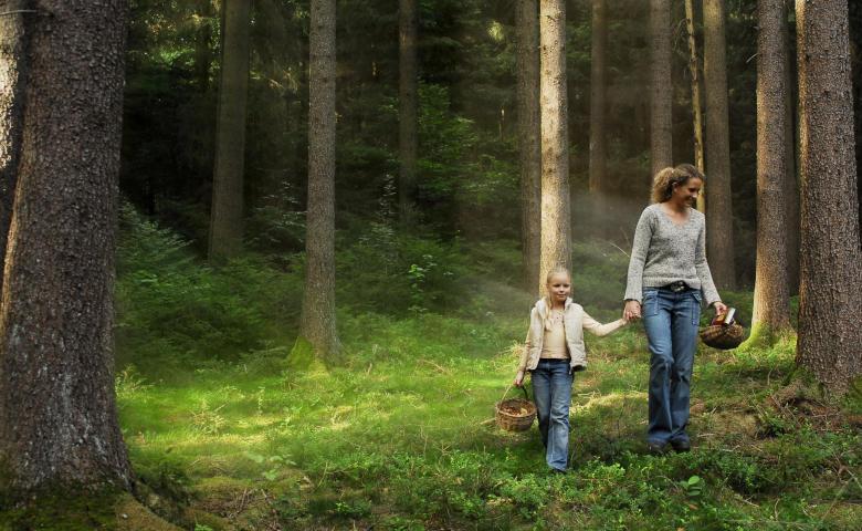 Urlaub im Wald - Pflanzen und Kräuter sammeln