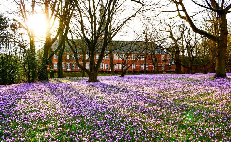 Ausflugsziele an der Nordsee: Krokusblüte in Husum