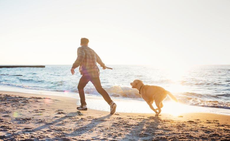 Nordsee Tagesausflug mit Hund an der Nordsee