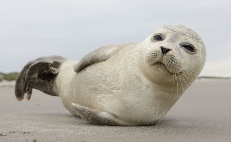 Seehundstation als Tagesausflugsziel an der Nordsee