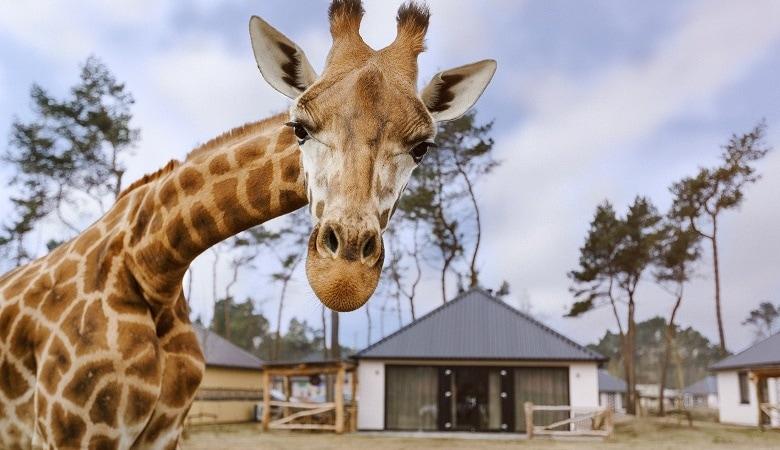 Übernachtung im Safari Ferienpark