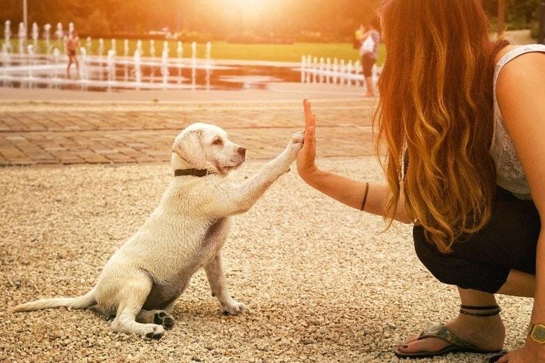 Amsterdam mit Hund