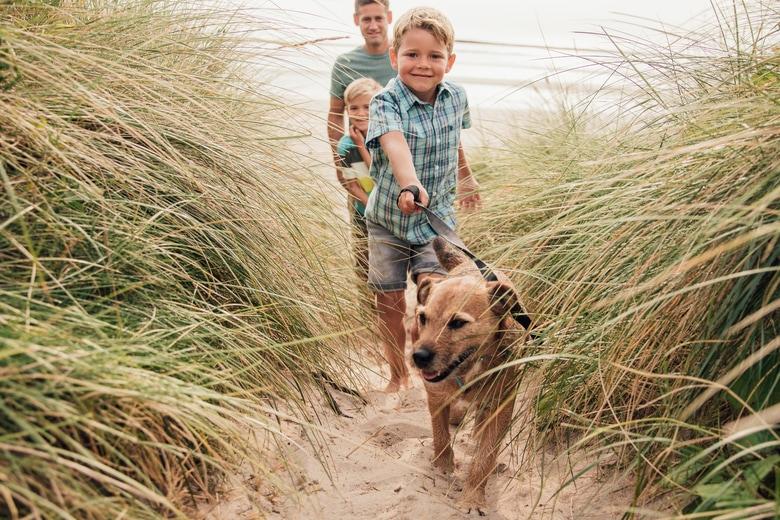 Holland mit Hund