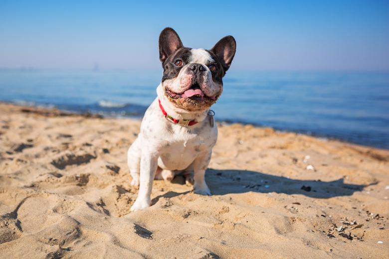 Hundeurlaub in Frankreich
